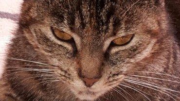Katze und Kaizen